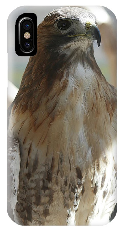 Bird IPhone X Case featuring the photograph Hawk by Joe Yvarra