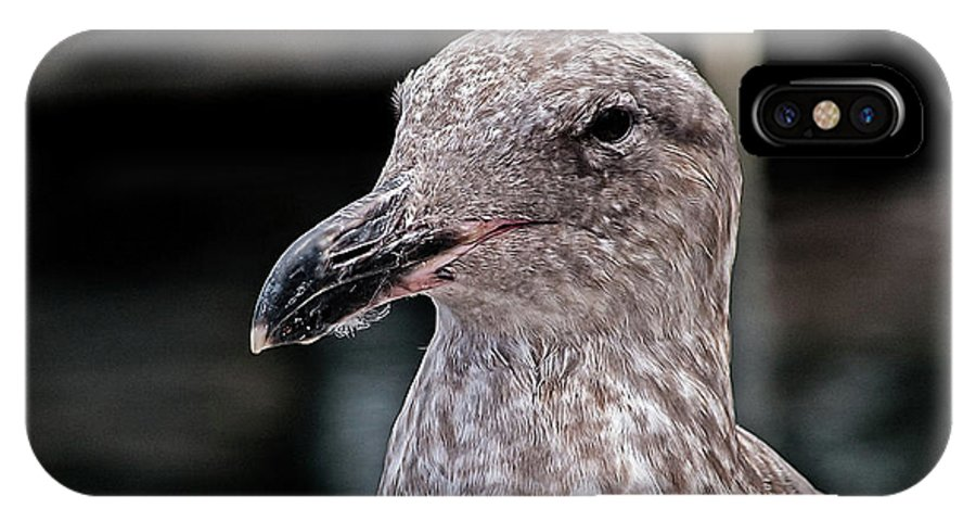 Seagull IPhone X / XS Case featuring the photograph Head Shot by Jay Billings