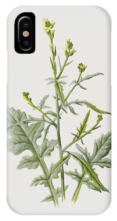 Hedge Mustard IPhone X Case featuring the painting Hedge Mustard by Frederick Edward Hulme