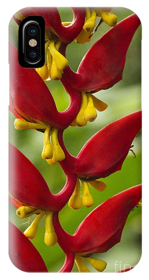 Heliconia IPhone X Case featuring the photograph Heliconia Dielsiana by Heiko Koehrer-Wagner