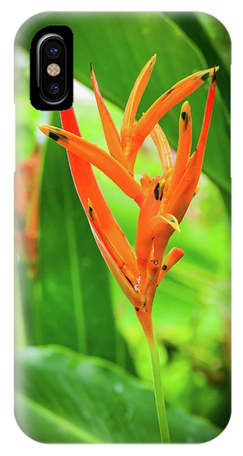 Heliconia Psittacorum IPhone X Case featuring the photograph Heliconia Psittacorum by Mao Lopez