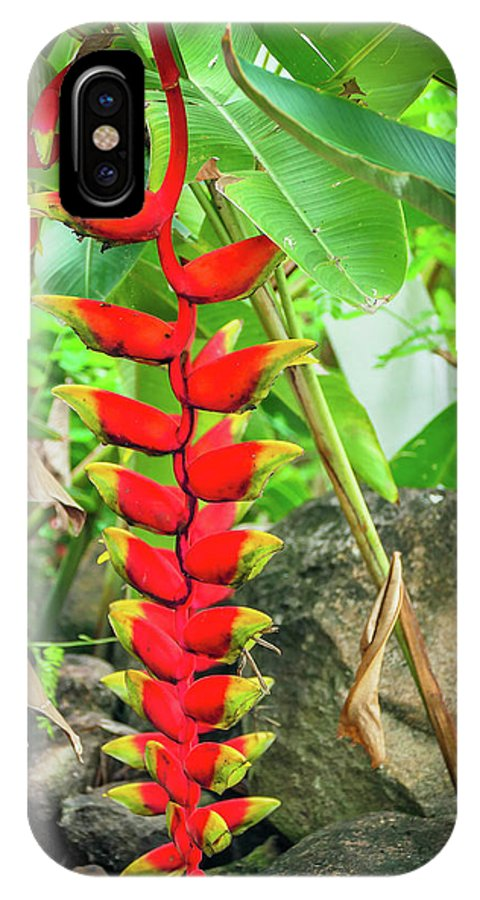 Heliconias Flower IPhone X Case featuring the photograph Heliconias Flower In The Forest by Mao Lopez