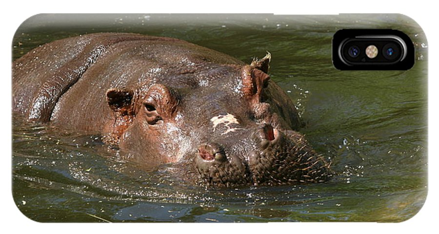 Hippo IPhone X Case featuring the photograph Heres Looking At You Kid by David Dunham