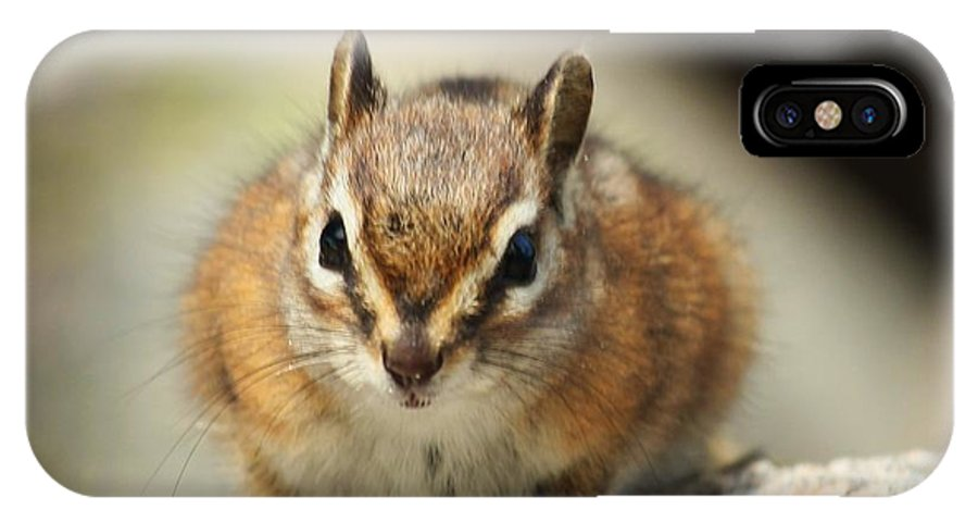 Chipmunk IPhone X Case featuring the photograph Here's Looking At You by Taylor Munson