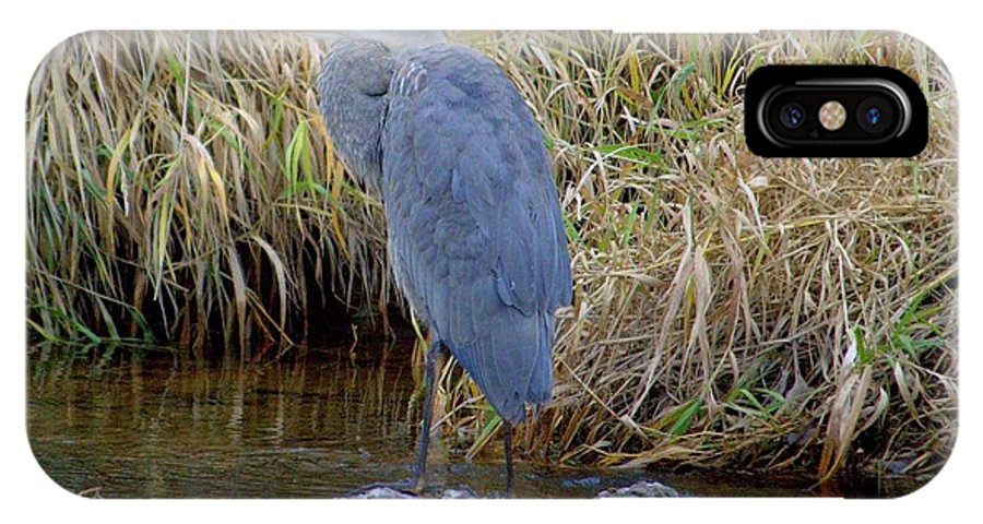 IPhone X / XS Case featuring the photograph Heron by Karen Mayer
