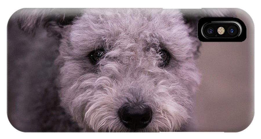 Pumi IPhone X Case featuring the photograph Hi by Jeff West