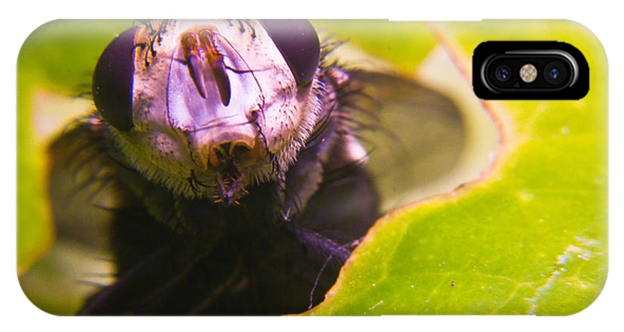 Fly IPhone Case featuring the photograph Hi There by Douglas Barnett