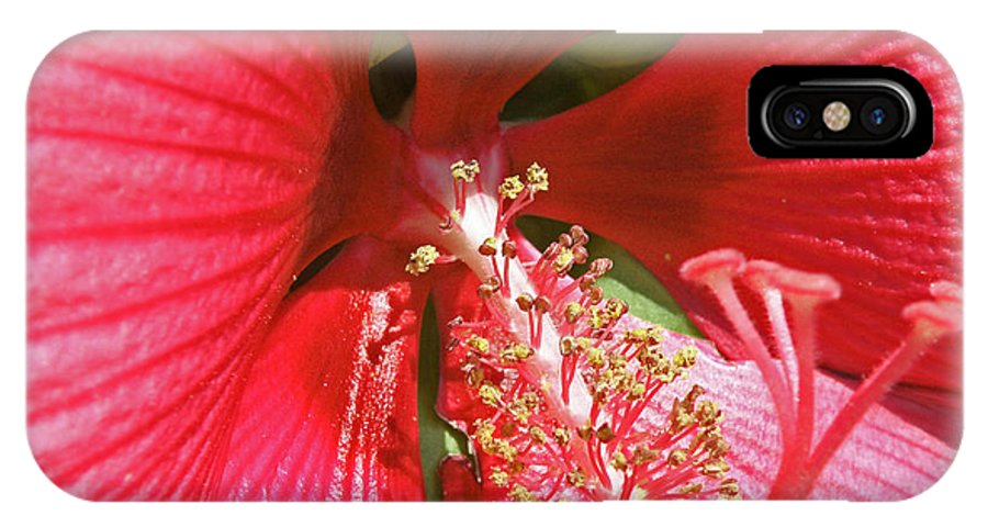 Flowers IPhone X Case featuring the photograph Hibiscus by Donna Shahan