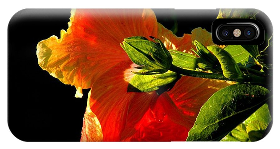 Flowers IPhone X Case featuring the photograph Hibiscus In The Light by Rosalie Scanlon