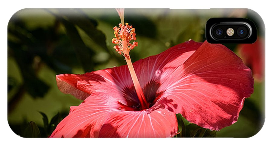 Red Hibiscus IPhone X Case featuring the photograph Hibiscus by Zina Stromberg