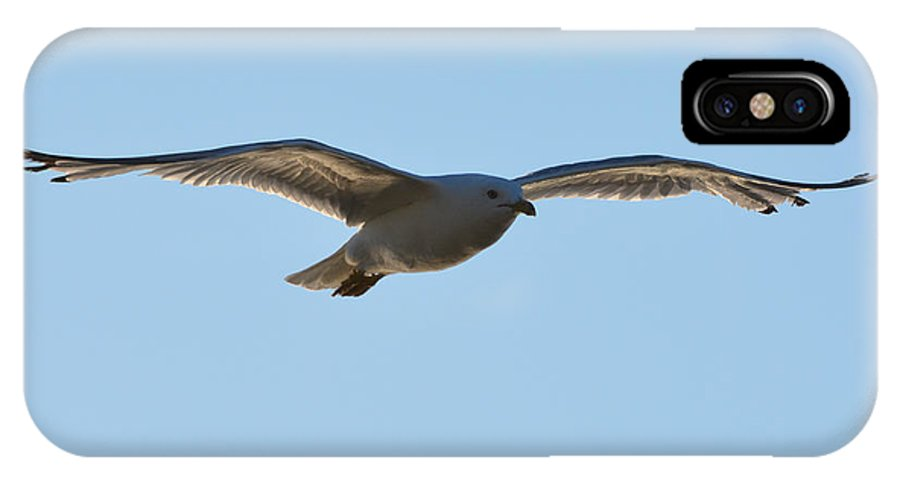 Seagull IPhone X Case featuring the photograph High Above The Shore by Richard Andrews