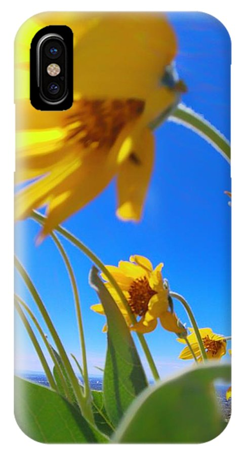 Flowers IPhone X Case featuring the photograph High And Windy by Delila Wysong