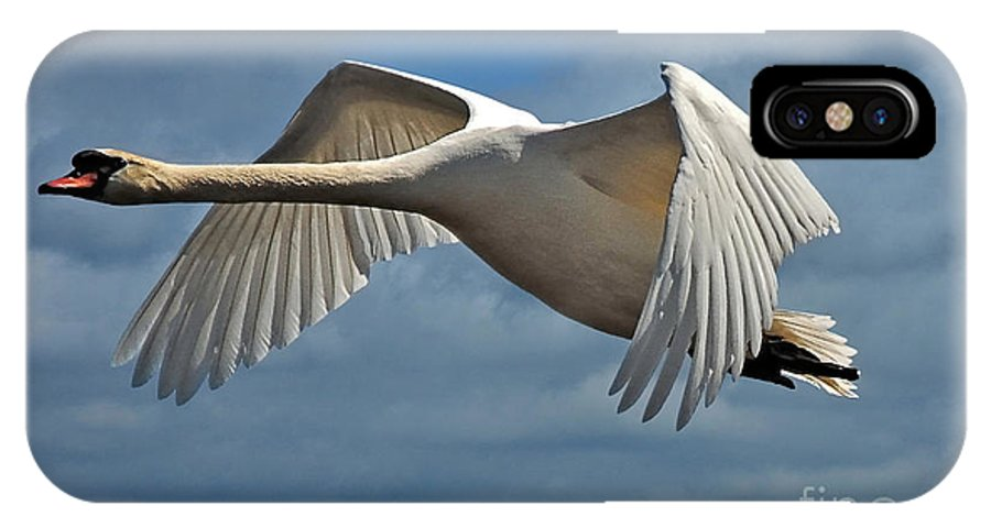 Swan IPhone X Case featuring the photograph High Flying by Lois Bryan