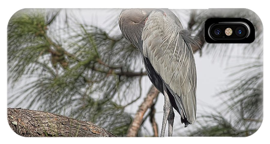 Blue Heron IPhone X Case featuring the photograph High In The Pine by Deborah Benoit