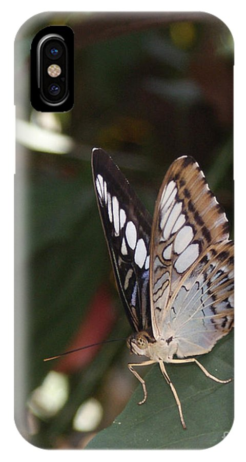 Butterfly IPhone Case featuring the photograph Hints Of Blue by Shelley Jones