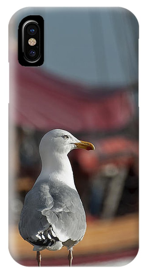 Festblues IPhone X Case featuring the photograph Hmm... Sooo... East Or West Today... by Nina Stavlund