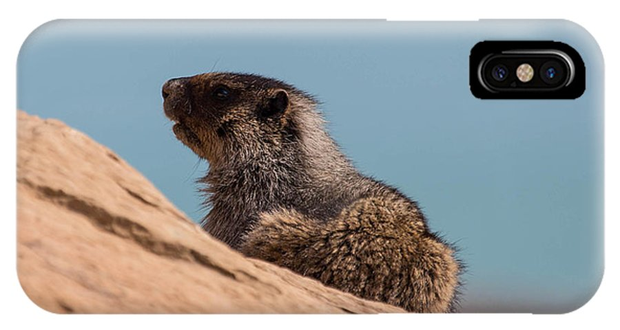 IPhone X Case featuring the photograph Hoary Marmot On Blue by J and j Imagery