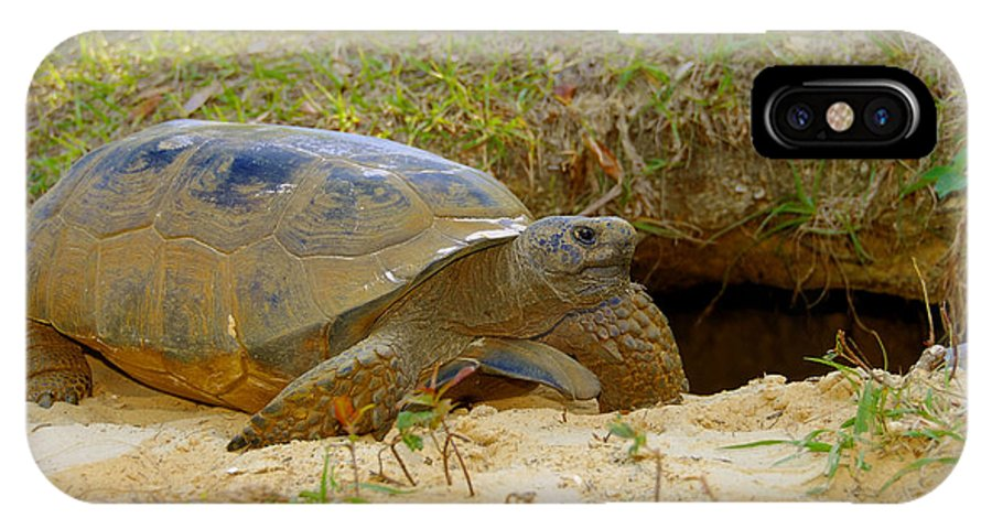Gopher Tortoise IPhone X Case featuring the photograph Home Sweet Burrow by David Lee Thompson