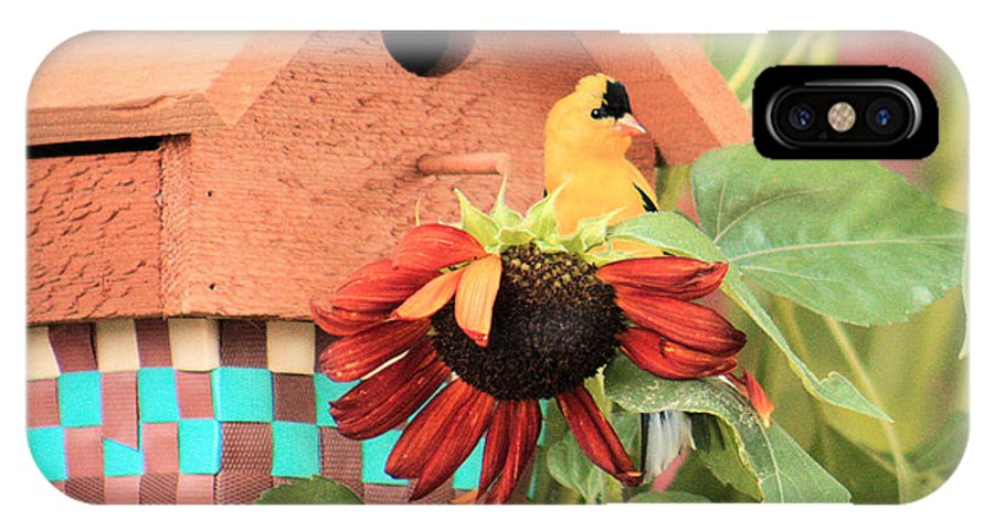 Finch IPhone X Case featuring the photograph Home Sweet Home by Janet Pugh