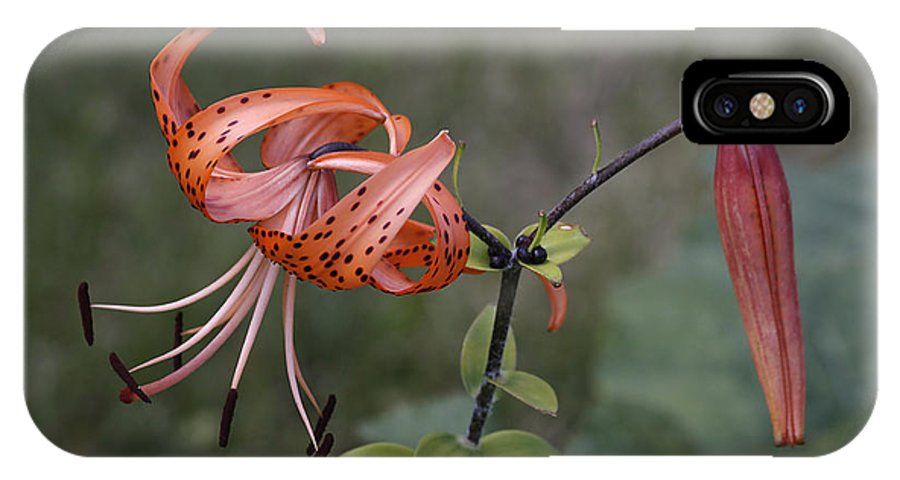 Flower IPhone X Case featuring the photograph Homestead Tiger Lilly by Deborah Benoit