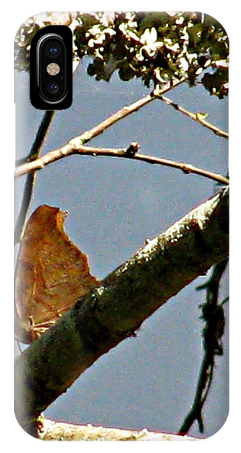 Wood Butterfly IPhone X / XS Case featuring the photograph Hook Winged Butterfly by Debra   Vatalaro