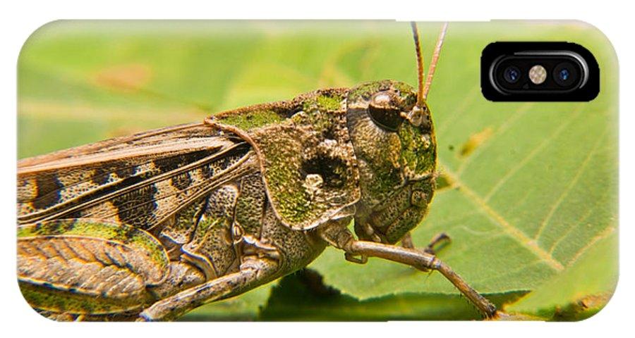 Grasshopper IPhone X Case featuring the photograph Hopper Face To Face by Douglas Barnett