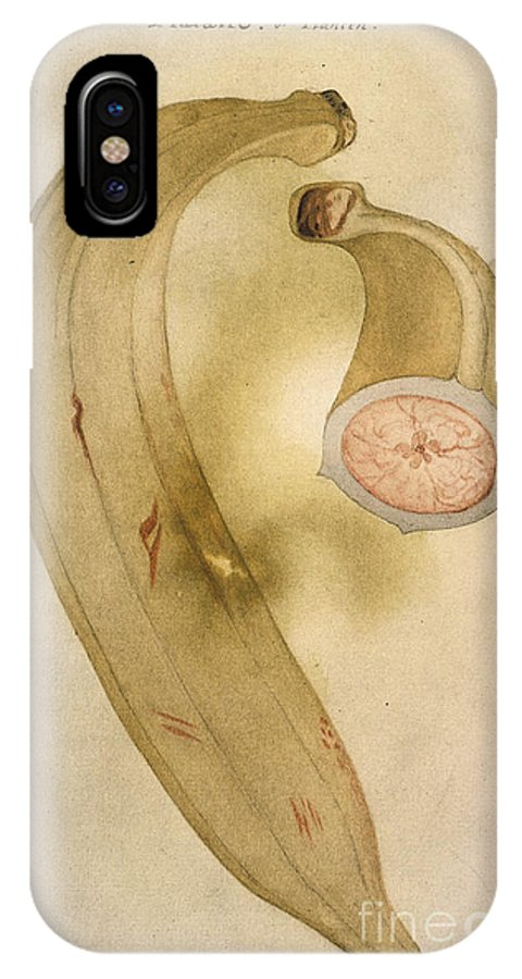 1585 IPhone X Case featuring the photograph Horn Plantain, 1585 by Granger