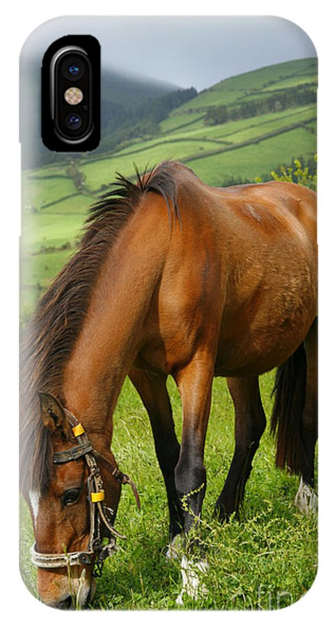 Animals IPhone Case featuring the photograph Horse Grazing by Gaspar Avila