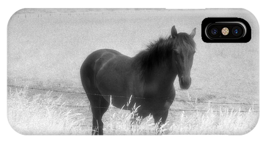 Horse IPhone X Case featuring the photograph Horse In A Summer Dreamfield by Lyle Crump