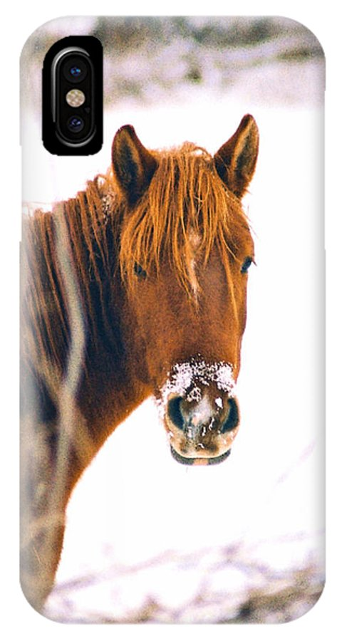 Horse IPhone X Case featuring the photograph Horse In Winter by Steve Karol