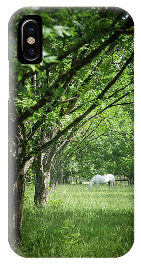 Horse Trees Green White Nature Country IPhone X Case featuring the photograph Horse by Lyssa Peace