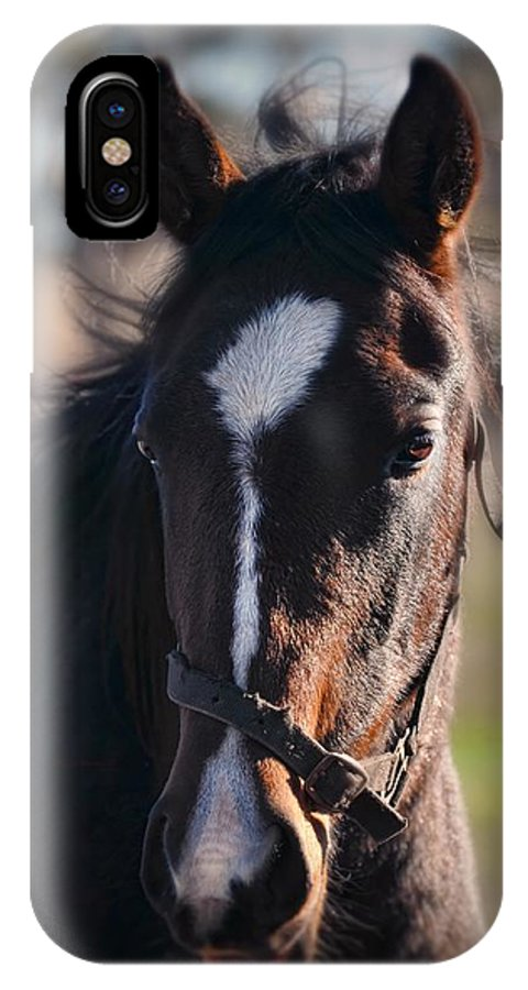Horse IPhone X Case featuring the photograph Horse Whispering by Georgiana Romanovna