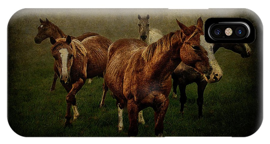 Horses IPhone X Case featuring the photograph Horses 31 by Ingrid Smith-Johnsen