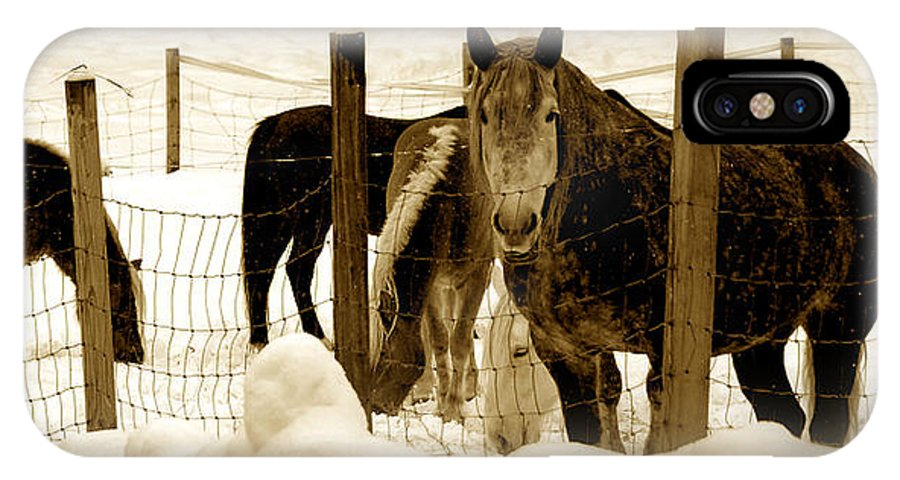 Fine Art IPhone X / XS Case featuring the photograph Horses by Craig Incardone