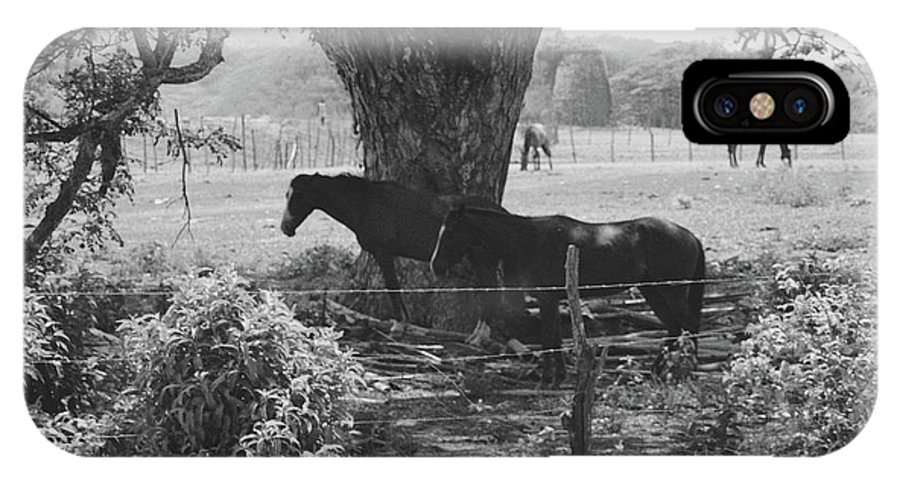 Horses IPhone X Case featuring the photograph Horses In The Pasture by Michelle Powell