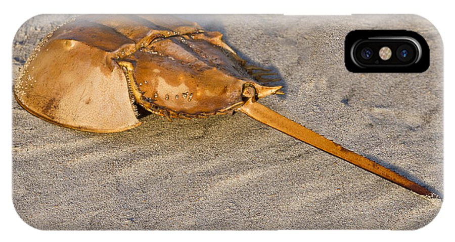 Inlet IPhone X Case featuring the photograph Horseshoe Crab by Bill Barber