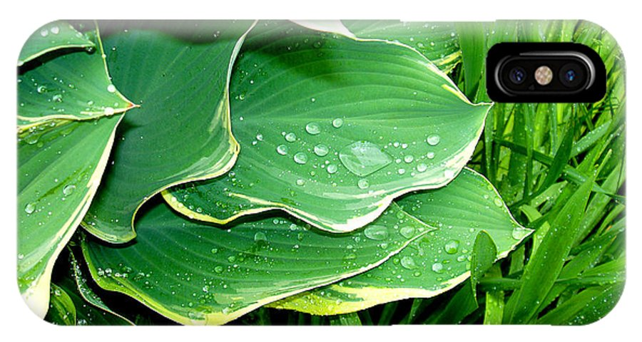 Hostas IPhone X Case featuring the photograph Hosta Leaves and Waterdrops by Nancy Mueller