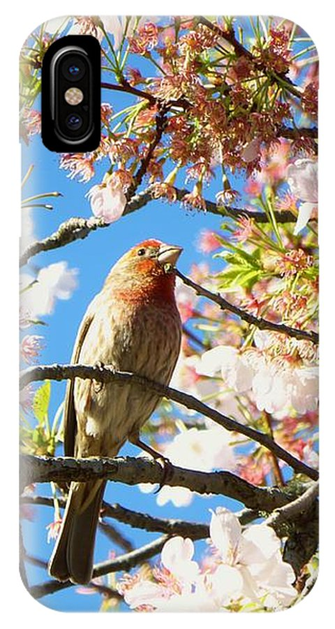 Cherry Tree IPhone X Case featuring the photograph House Finch In The Cherry Blossoms by As the Dinosaur Flies Photography
