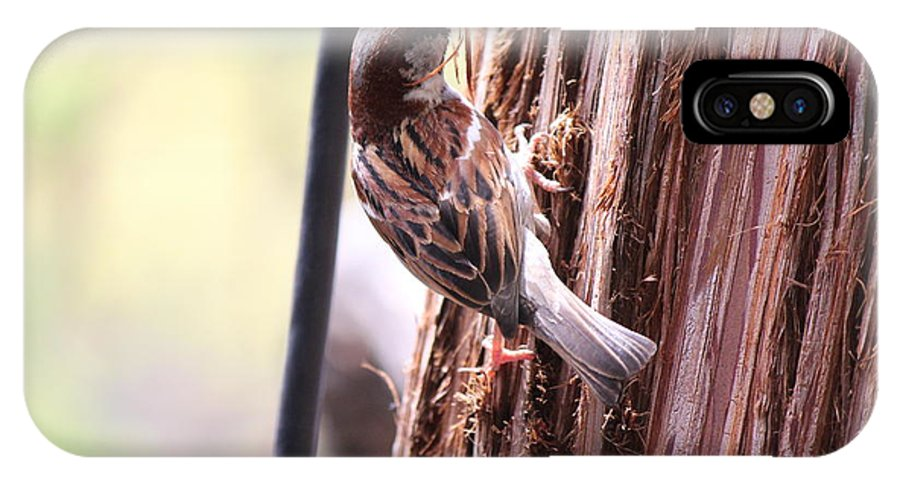 North IPhone X Case featuring the photograph House Sparrow by Nicholas Miller