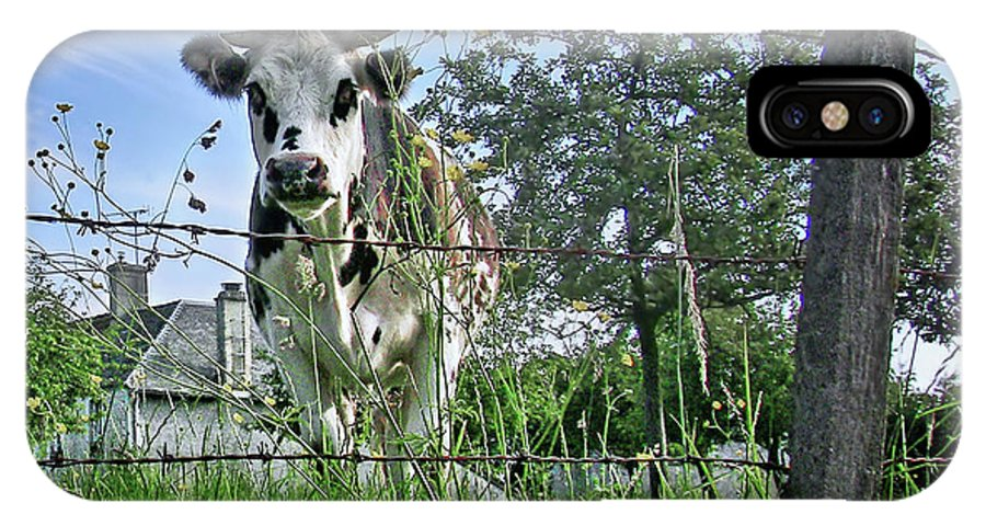 Cows IPhone X Case featuring the photograph How Now - Normandy Cow by Nikolyn McDonald