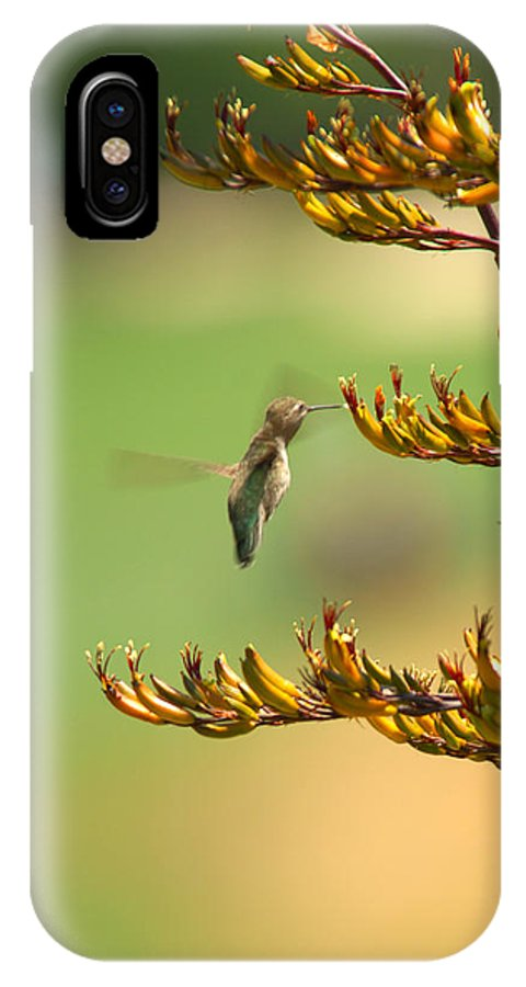 Hummingbird Bird Nature Nectar Plant Flower Botanical IPhone X Case featuring the photograph Hummingbird Drinking Nectar by Jill Reger