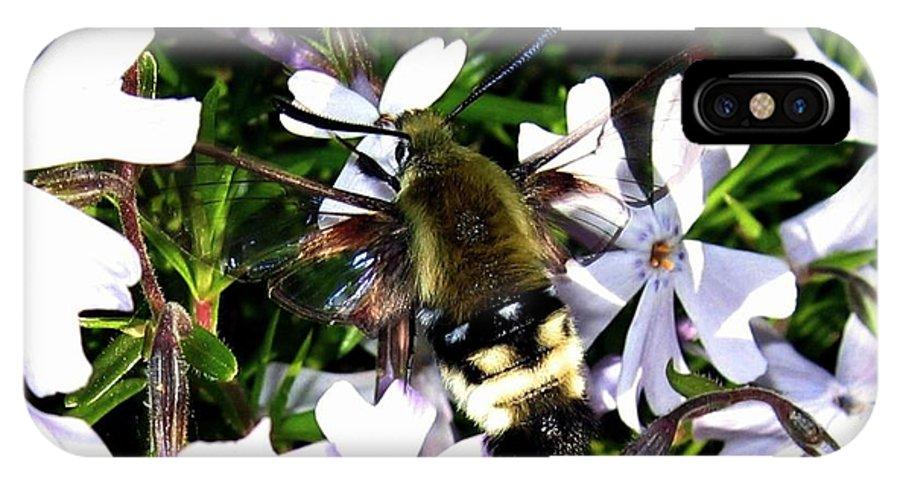 Hummingbird Moth IPhone X Case featuring the photograph Hummingbird Moth by Will Borden