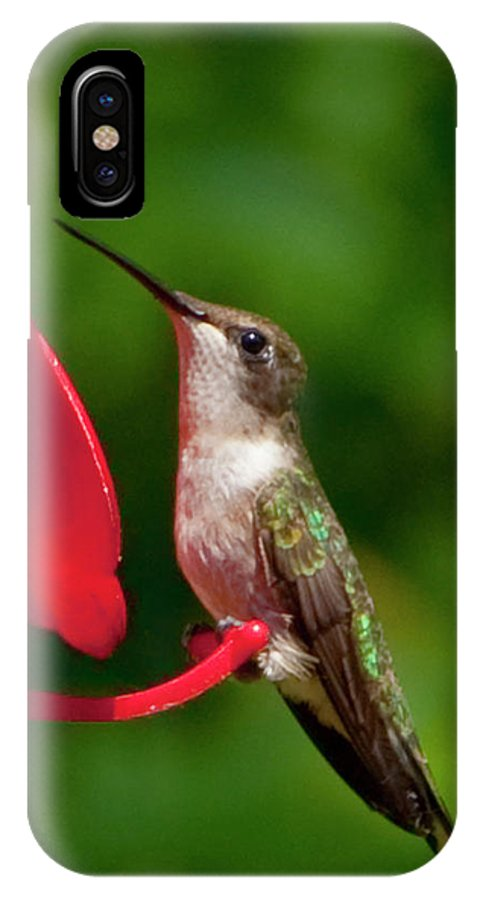 Photography IPhone X Case featuring the photograph Hummingbird by Steven Natanson