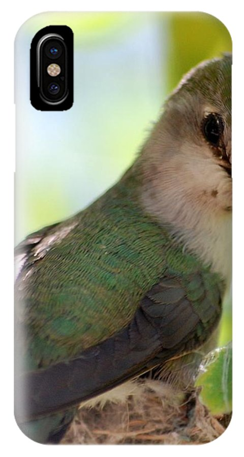 Hummingbird IPhone Case featuring the photograph Hummingbird With Small Nest by Amy Fose