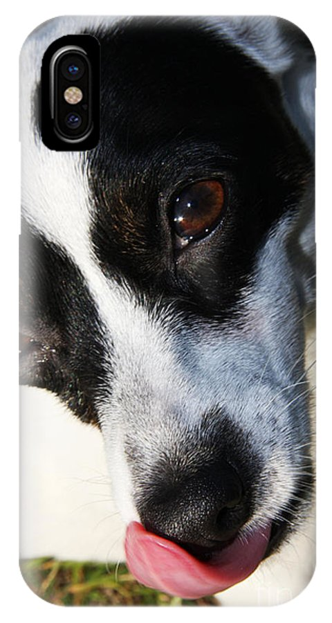 Pet IPhone X / XS Case featuring the photograph Hungry Dog by Jorgo Photography - Wall Art Gallery