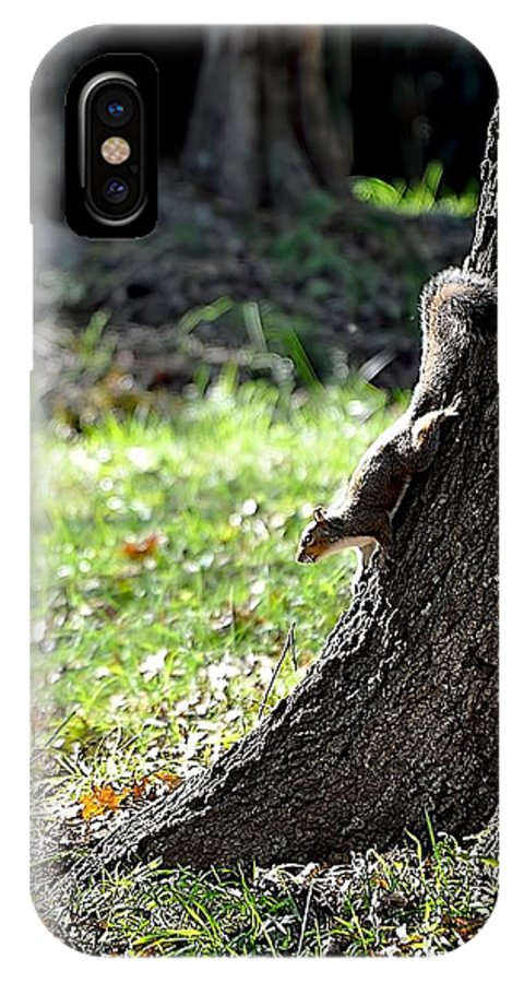 Animals IPhone X Case featuring the photograph Hunting Acorns by Jan Amiss Photography
