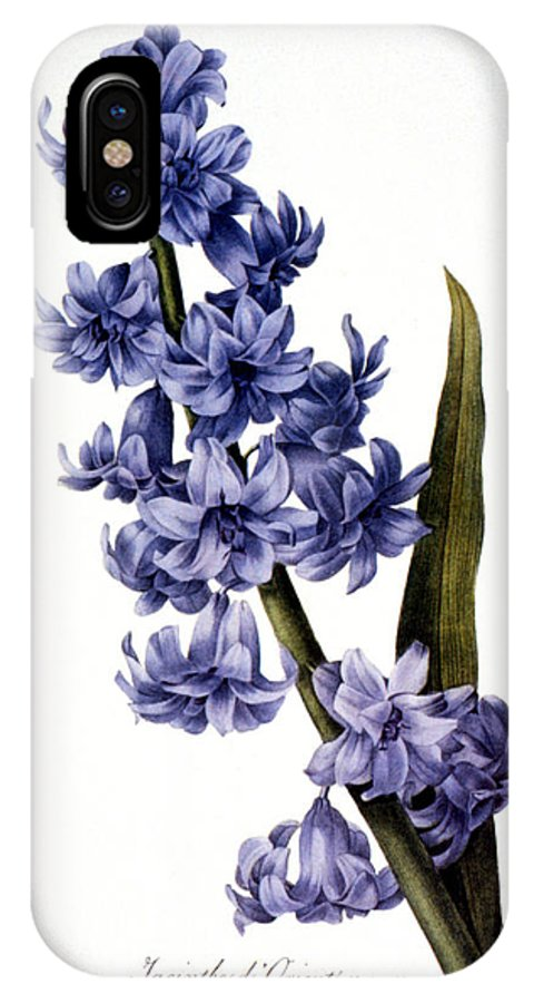 1833 IPhone X Case featuring the photograph Hyacinth by Granger