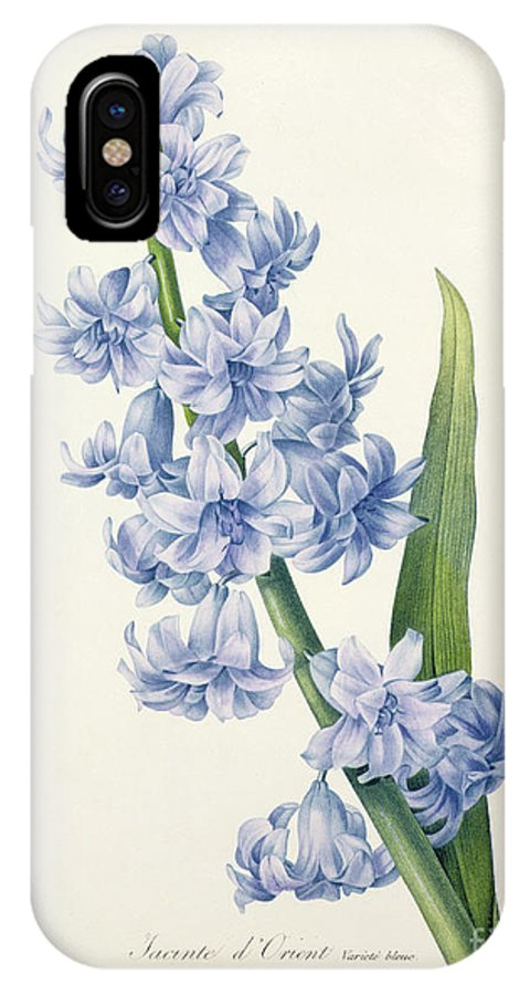 Hyacinthus IPhone X Case featuring the drawing Hyacinth by Pierre Joseph Redoute