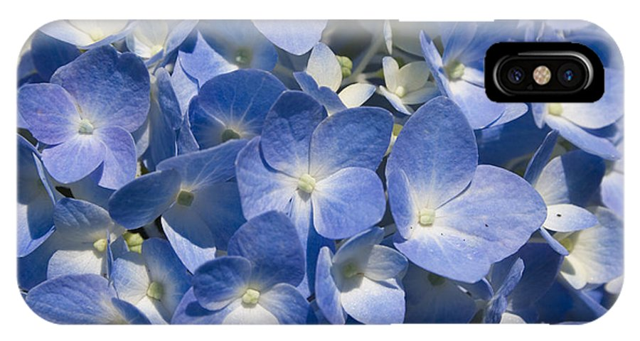 Flower Bloom Blue White Close Nature Sunny Summer Hydrangea IPhone X Case featuring the photograph Hydrangea by Andrei Shliakhau
