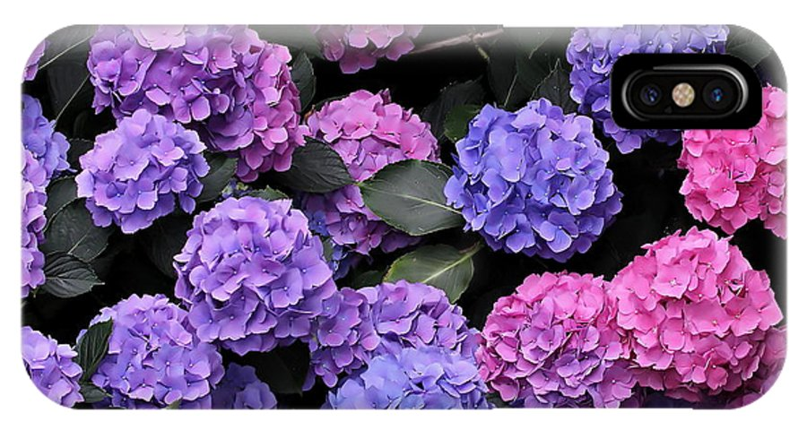 Hydrangea IPhone X Case featuring the photograph Hydrangea Bush by Angie Vogel